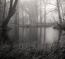 Foggy Forest Pond by Kofoed
