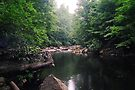 Cool and Calm West Virginia Water by Allen Lucas
