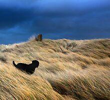 """Black Dog"" by Raymond Kerr"