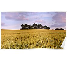 Wheat field at dusk Poster