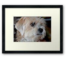 Stray pup. . .  Framed Print