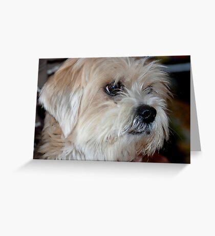 Stray pup. . .  Greeting Card