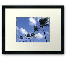 Palm trees in the wind. Framed Print