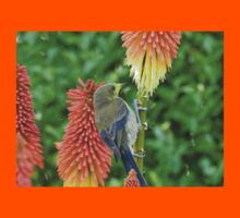 These Pokers Are Sweet - Female Bellbird - NZ Kids Clothes