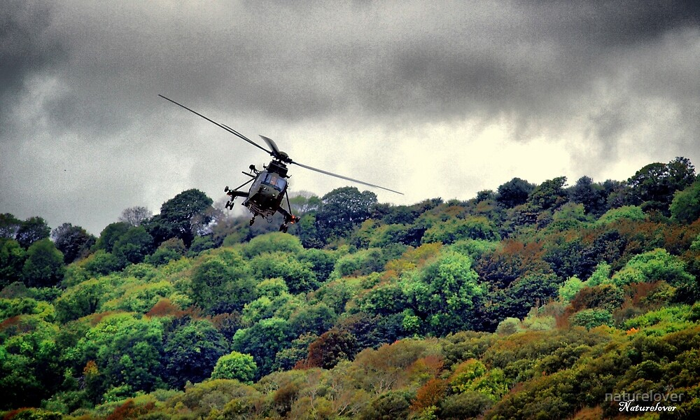 Puma in Flight by naturelover