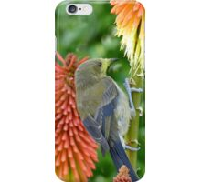 These Pokers Are Sweet - Female Bellbird - NZ iPhone Case/Skin