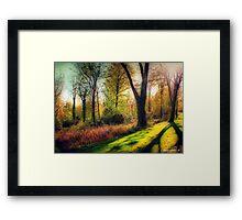Autumn Woodland  Framed Print