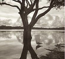 lake ainsworth & seagull by GrowingWild