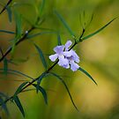 mint bush by GrowingWild
