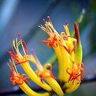 mistletoe  by GrowingWild