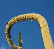 xanthorrthea in full bloom by GrowingWild