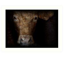 Cow Eyes Art Print