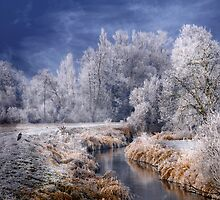 Cold Serenity by Philippe Sainte-Laudy