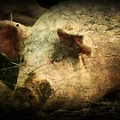 Sweet Sow by TingyWende