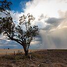 Wild blows the Wind by David Haworth
