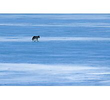 On Thin Ice Photographic Print