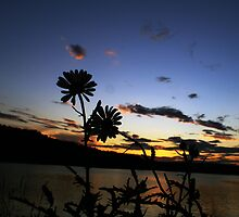 flowers silouette by Eric Maki