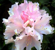 Rhododendron, for leggings, tote bag, pillow and poster etc. by Robert Elfferich