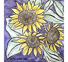 Sunflowers III Photographic Print