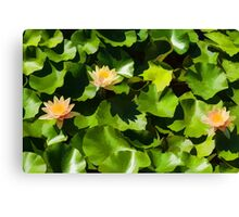 Light, Shadow and Color - Waterlily Pad Impression Canvas Print
