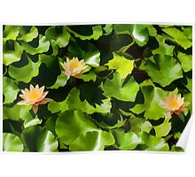 Light, Shadow and Color - Waterlily Pad Impression Poster