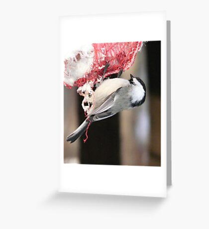 Chickadee Eating Fat  Greeting Card