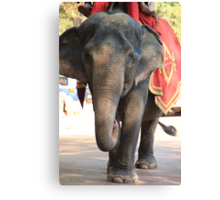 Asian Elephant Canvas Print