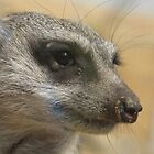 hello meerkat so very nice to meet you by meareneko