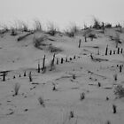 Sandbridge Beach Dunes by meinvb
