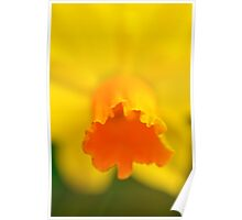 Yellow Spring Narcissus Daffodil Flower Close-up Poster