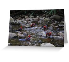 Circle of friends.  Parrots at Badgers Creek, Healsville Victoria.  Greeting Card