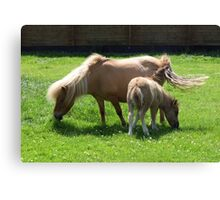 Mare and New Foal Canvas Print