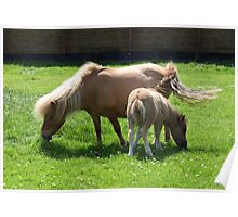 Mare and New Foal Poster