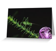 Covers Blown Greeting Card
