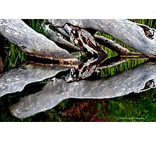 Reflections in Nature Photographic Print