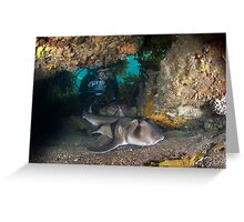 Port jackson shark in cave with diver Greeting Card