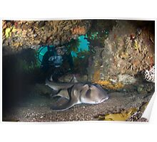 Port jackson shark in cave with diver Poster