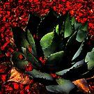 cactus by glenda1998