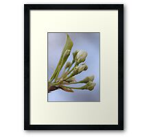 Prelude to the Pops Framed Print