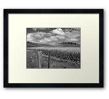 Spring Canola Framed Print
