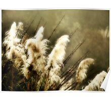 Pampas Grass #13 Poster