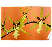 Orchid Dance Poster