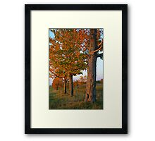 Golden Afternoon in the Meadow Framed Print