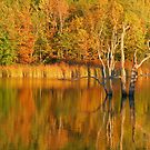 Teeter Pond, Finger Lakes National Forest, Hector, NY, USA by mklue