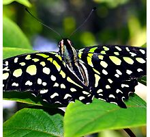 Green and Yellow Spotted Butterfly Photographic Print