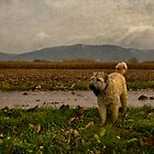 The Wandering Wheaten by Boston Thek Imagery