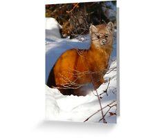 Pine Marten,(Sable) Greeting Card