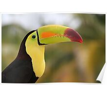 Colorful Tucan Poster