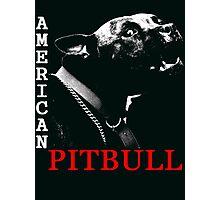 american pit bull Photographic Print