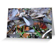 Adult drywood termite's (Florida Termites) Greeting Card